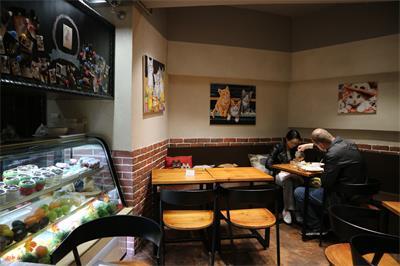 Cat cave café