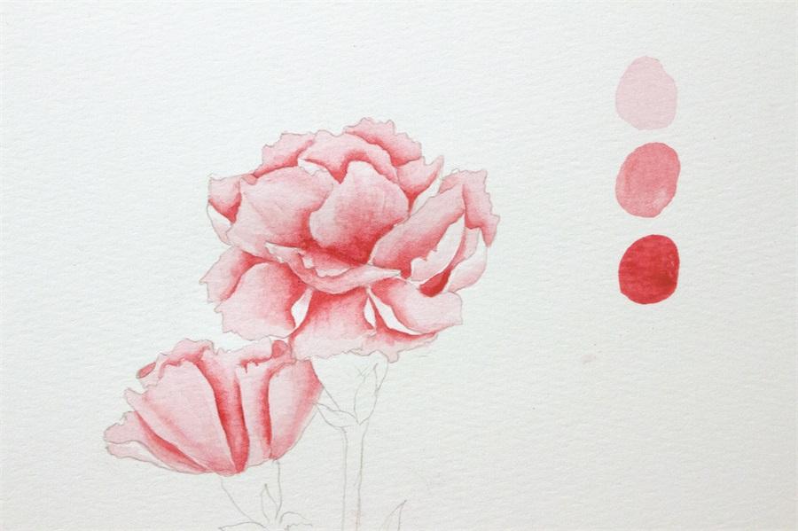 畫出愛意:跟著達人學用水彩畫康乃馨
